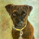 Brody in Pastel